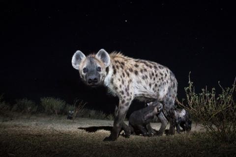 Подборка  интересных фотографий животных