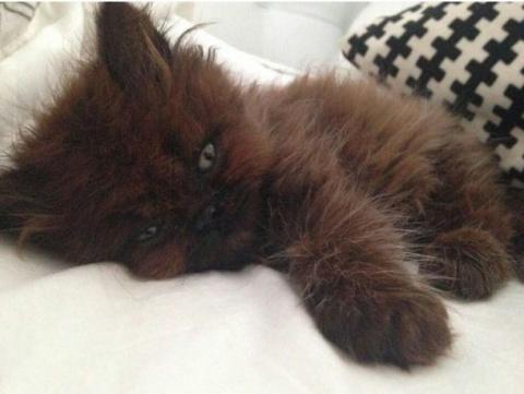 Девушка приютила маленького больного котенка. Через год ее ждал БОЛЬШОЙ сюрприз!