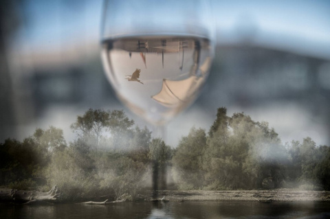 Прованс. 4 дня и 3 ночи : концептуальный фотопроект Ирины Клименко