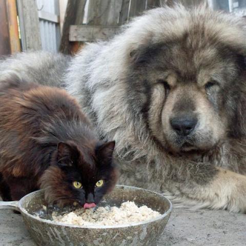 Как кот прикормил себе защитника. Вот же хитрюга, как только додумался?!