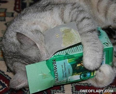 КОШКИН ДОМ. Котики и наркотики…