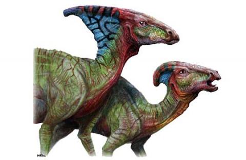 Петушок или курочка? Половой диморфизм динозавров поставили под вопрос