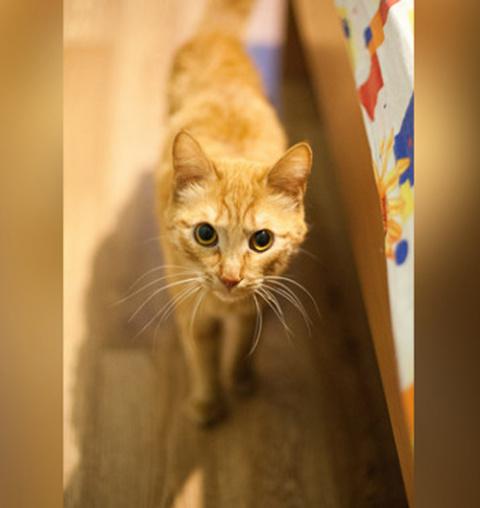 В Красноярске кот-бумеранг возвращается к хозяину, который его выбрасывает
