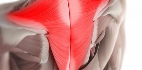 Королевская гимнастика: комплекс  упражнений при болях в спине