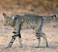 Ученые выяснили, как кошки з…