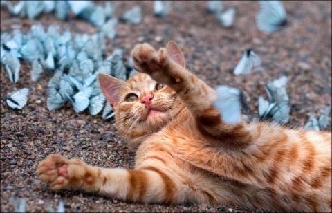 Коты и бабочки. Позитив —  это так мимими!