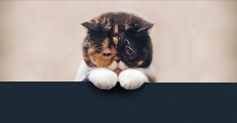 Хозяева выбрасывали кота в п…