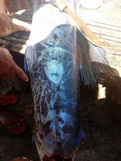 Рыбаки выловили «татуированн…