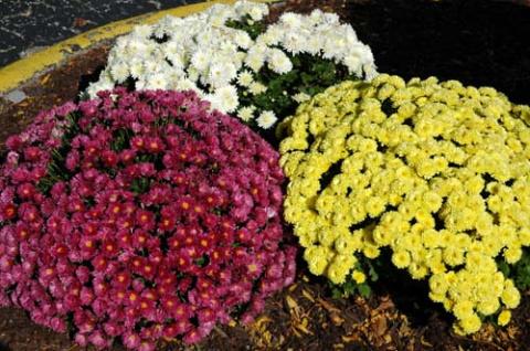 9 комнатных растений, которые отлично чистят воздух и никогда не умирают