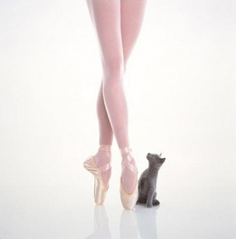 Правда о ножках балерин. Миф…