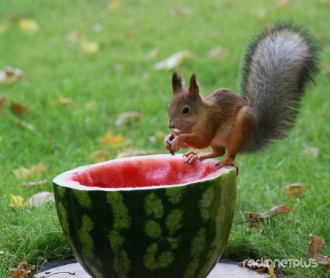 Все любят арбузы!