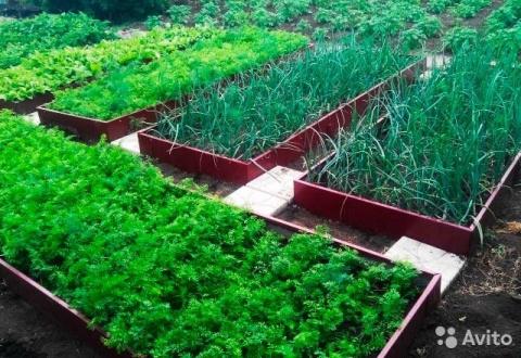 Что посадить в огороде в июле