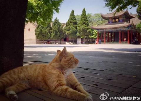 В Китае интернет-пользователи спасли кошек от выселения из музея