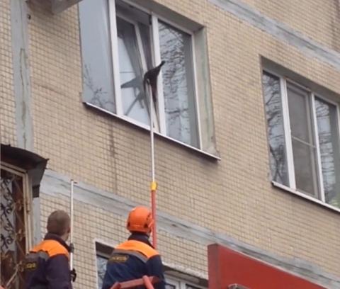Пожарные спасли кота, застрявшего в окне многоэтажки в Петербурге