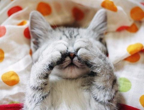 Милые и веселые котики для у…