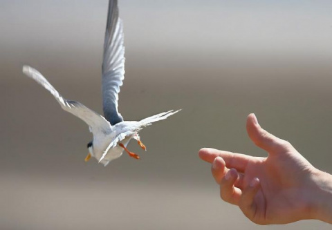 Искусство расставания: умение благодарить и отпускать