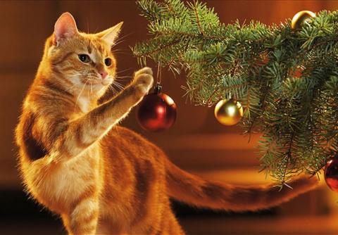 Как защитить новогоднюю елку от кота! Мопс - веселый клоун с грустными глазами