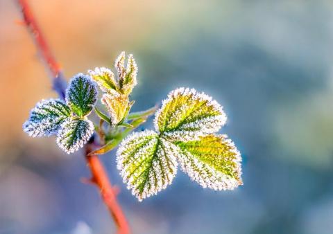 САД, ЦВЕТНИК И ОГОРОД. Укрытие растений на зиму – развенчиваем мифы