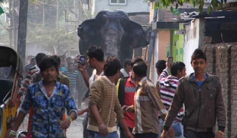 Паника слоновьего масштаба