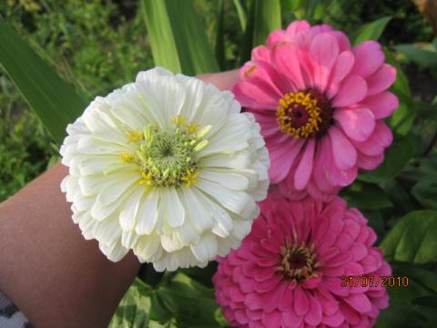 Какие цветы цветут в июле на даче