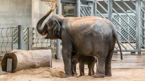 В зоопарке Ростова родился а…