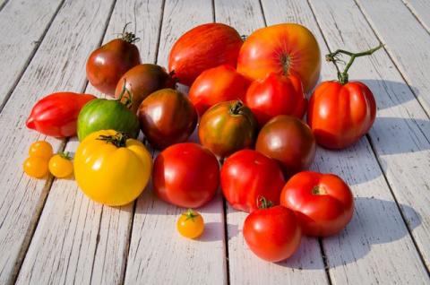 Выбираем сорт томатов для теплицы и открытого грунта