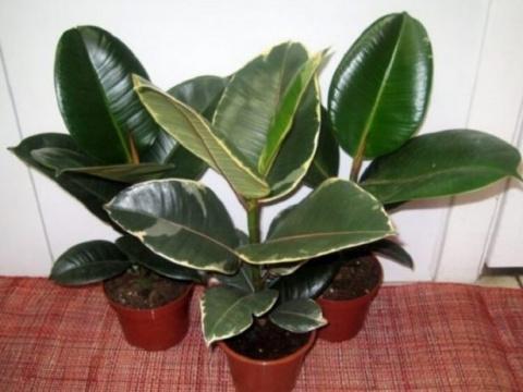 Хотя бы одно из этих растений должно быть у каждого дома! Ведь они — кислородные бомбы!