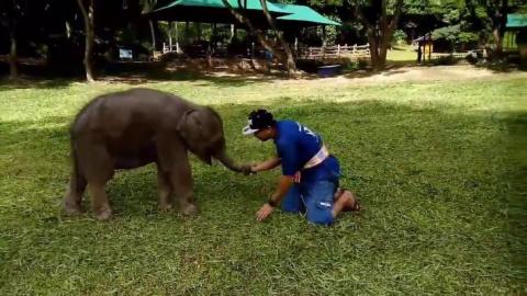 Будьте снисходительны к слон…