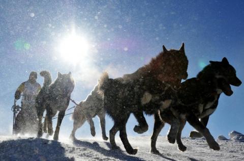 Гонки на ездовых собаках – с…