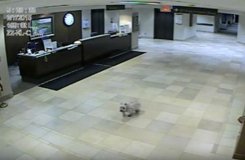 Самый преданный друг: собака сама нашла хозяина, увезенного в больницу