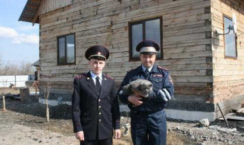 В Минусинске полицейские спасли кота из горящего дома