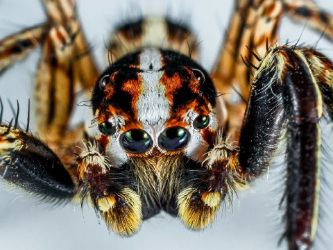 Боязнь пауков и насекомых ок…