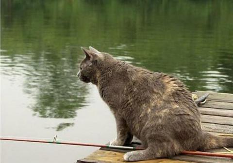 Коты и собака ловят рыбку. Смешное видео для поднятия настроения