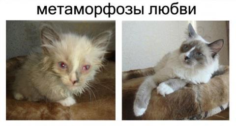 """Метаморфозы любви: спасённые кошки """"до"""" и """"после"""""""