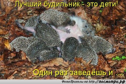 http://mtdata.ru/u4/photoCFCA/20639008407-0/big.jpeg
