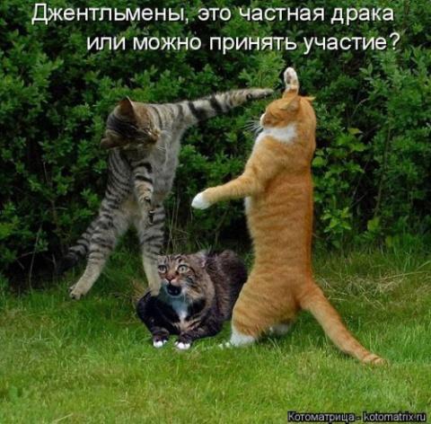 Свежая котоматрица для настр…
