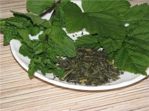 Целительные листья смородины