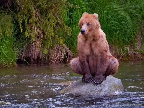 Полез как-то медведь в дупло…