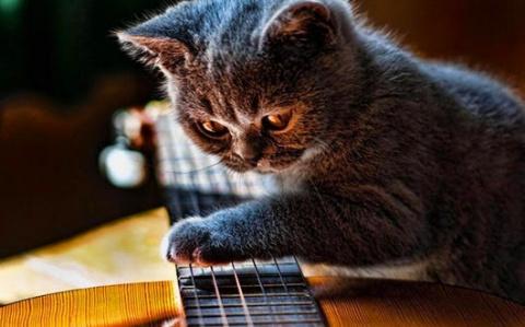 Кот незаменим в хозяйстве