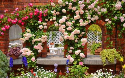Свои розы спасаю от болезней народными средствами