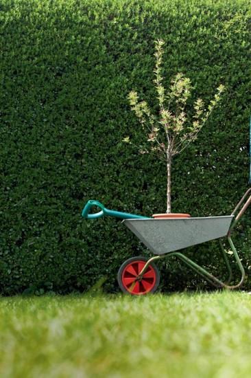 20 актуальных вопросов про садовый участок