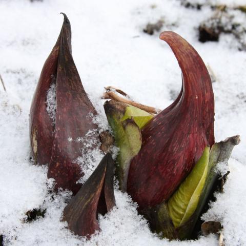 Теплокровные растения