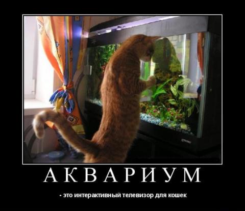 А вы знали, что аквариум – э…