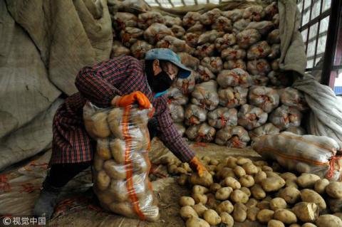 Догадайтесь в какой стране, можно стырить гепотетически самый большой картофель.