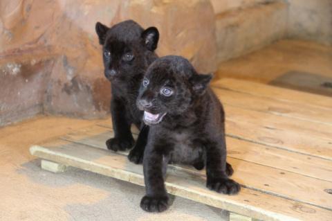 В Нижегородском зоопарке «Ли…