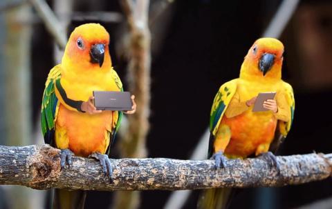 Птице-люди в рекламе Asus