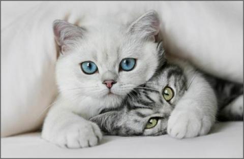 Для тех кому нравятся кошки