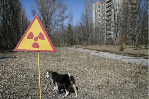 В зоне отчуждения Чернобыльской АЭС задержали двух человек