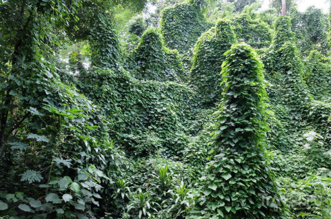 Индонезийские  природные  красоты