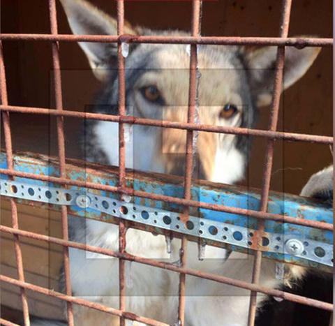 Кинологи МВД: Служебные собаки в Подмосковье истощены из-за дешёвого корма